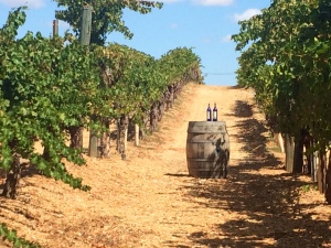 Wilson Creek Winery vineyard